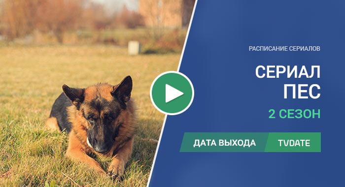 Видео про 2 сезон сериала Пес