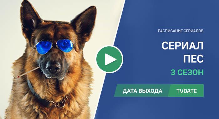 Видео про 3 сезон сериала Пес